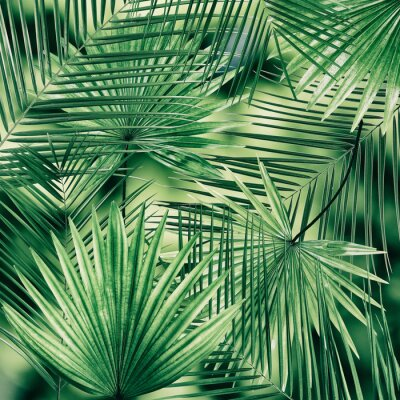 Fototapeta Tło liści palmowych