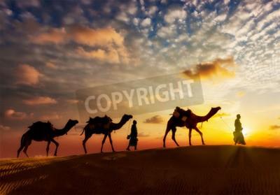 Fototapeta Tło podróży - kierowcy dwa cameleers (camel) z wielbłądami sylwetki wydmy pustyni w na zachodzie słońca