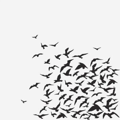 Fototapeta tło ptaki