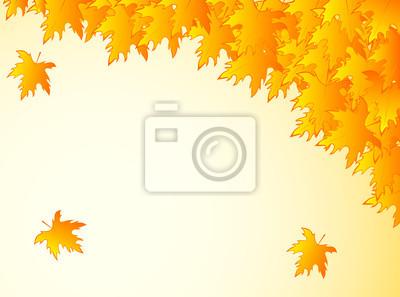 tło w ciepłych kolorach z żółtych liści klonu.