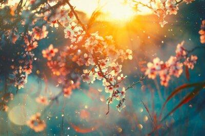 Fototapeta Tło wiosna blossom. Natury scena z kwitnącym drzewa i słońca racą. Wiosenne kwiaty. Piękny sad