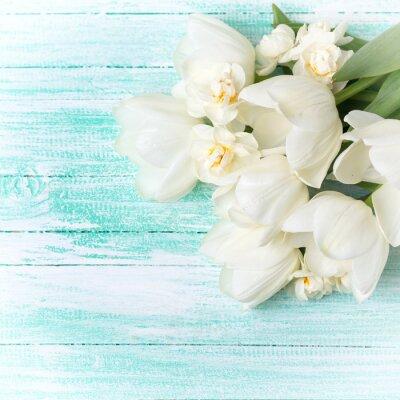 Fototapeta Tło z białych tulipanów i narcyzów