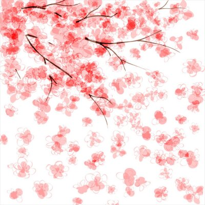 Fototapeta Tło z kwitnących wiśni japońskiej