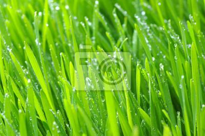 Fototapeta tło zielony trawnik