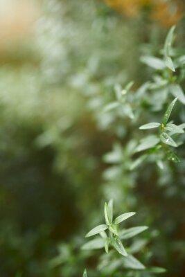 tło zielonych liści