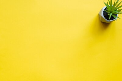 Fototapeta Top view of potted plant on yellow surface with copy space