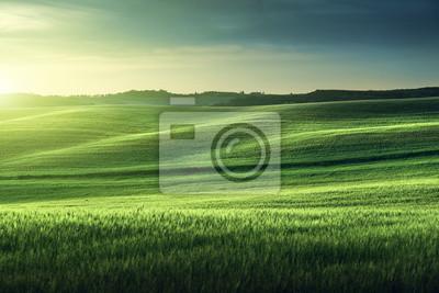 Fototapeta Toskania słońca, Włochy