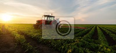 Fototapeta Tractor spraying soybean field in sunset