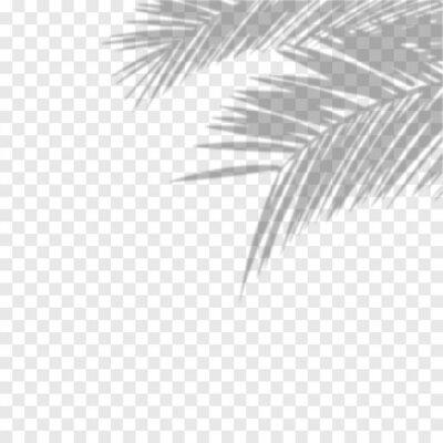 Fototapeta Transparent shadow overlay effect. Vector of transparent shadows of palm leaf. Vector illustration