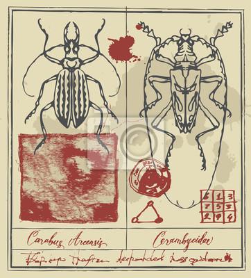 Transparent wektor z rysunkami o długich rogach chrząszczy, odręczne napisy i plamy tuszu w stylu retro