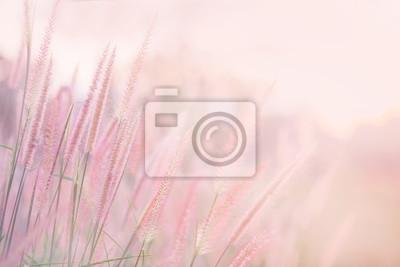 Fototapeta Trawa kwiat w miękkiej ostrości i zamazujący z rocznika stylem dla tła