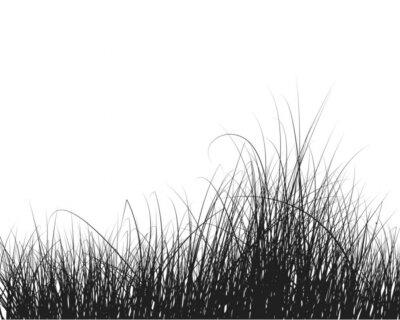 Fototapeta trawa w tle