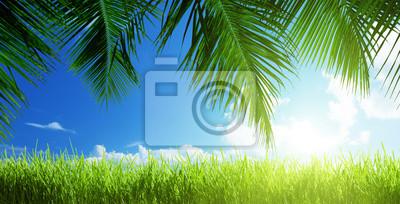 Fototapeta trawy w słoneczny dzień