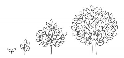 Fototapeta Tree growth stages. Seedling development stage. Animation progression. Business cycle development infographic. Vector contour line. Open paths. Editable stroke. Plant life process.