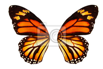 Fototapeta tropical butterfly wings isolated on white background.