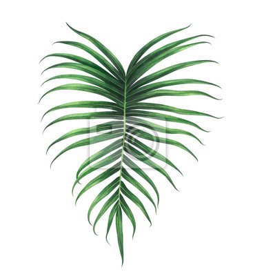 Tropical leaf isolated on white background. Watercolor illustration.
