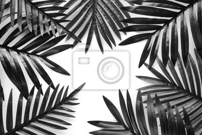 Fototapeta Tropical leaves foliage plant close up with white copy space background.Nature and summer concepts ideas