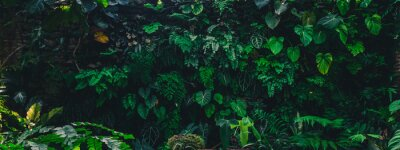 Fototapeta Tropical leaves texture,Abstract nature leaf green texture background,picture can used wallpaper desktop