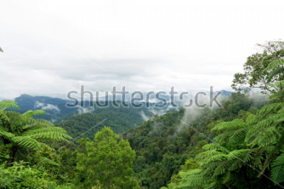 Fototapeta Tropical mountain range view. Timelapse Of Moving Clouds And Fog over Titiwangsa mountain range . View of High Humidity Jungle Rainforest  at Royal Belum State Park jungle in Malaysia.