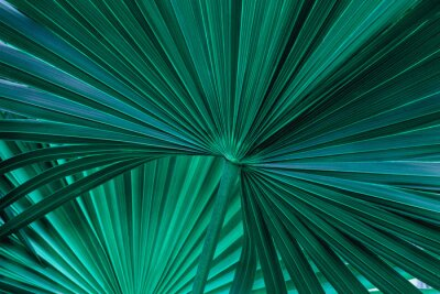 Fototapeta tropical palm leaf and shadow, abstract natural green background, dark tone textures