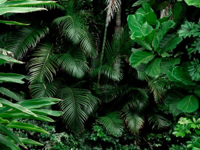 Fototapeta Tropical Rainforest Landscape background. Tropical jungle palms, trees and plants