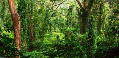 Fototapeta Tropikalna dżungla