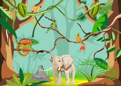 Fototapeta Tropikalna dżungla ilustracji tła