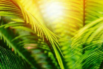 Fototapeta Tropikalna gałąź palmowa i gorące światło słoneczne - koncepcja podróży tropikalnych lub produktów