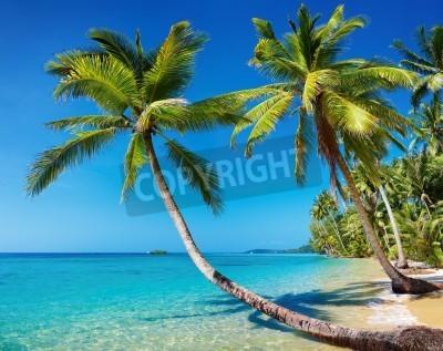 Fototapeta Tropikalna plaża z palmami, wyspa Kood, Tajlandia
