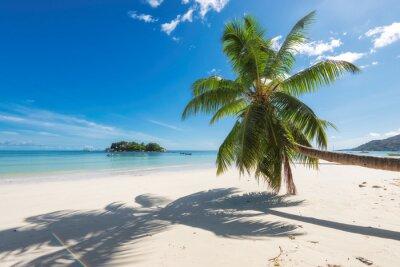 Fototapeta Tropikalna plaża z palmy