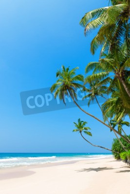 Fototapeta Tropikalna plaża z palmy na brzeg oceanu i czyste piasku w słoneczny dzień