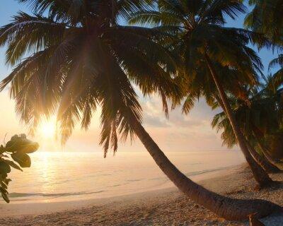 Fototapeta Tropikalna plaża z wschodem słońca i palmy