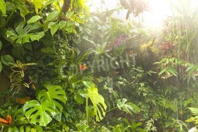 Fototapeta Tropikalne lasy deszczowe