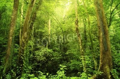 Fototapeta Tropikalne lasy deszczowe krajobrazu, Malezji, Asia