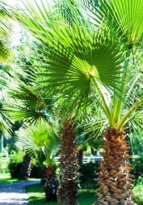 Fototapeta Tropikalne palmy