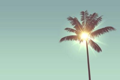 Fototapeta Tropikalne palmy sylwetka przed jasnym świetle słonecznym
