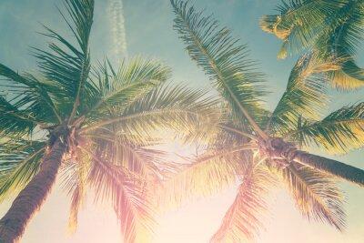 Fototapeta Tropikalny krajobraz z palmami i sunny sky