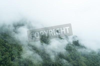 Fototapeta Tropikalny las deszczowy na deszczowy rano.