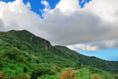 Fototapeta Tropikalny las deszczowy w San Juan