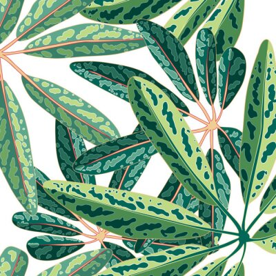 Fototapeta Tropikalny liść botaniczny wektor bezszwowe tło