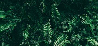 Fototapeta Tropikalny zielony liść w ciemnym odcieniu.
