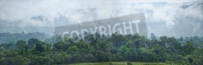 Fototapeta Tropikalnych lasów tropikalnych, Tajlandia