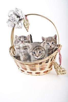 Fototapeta Trzy kocięta w koszyku