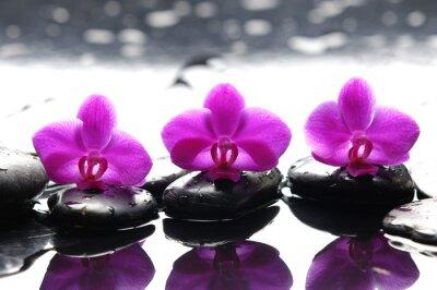 Trzy zen kamienie i trzy storczyki z refleksji