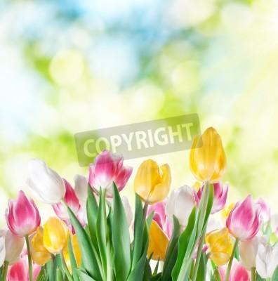 Fototapeta Tulipany na tle rozmycia natury.
