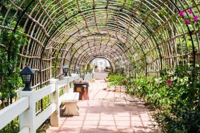 Fototapeta Tunel Bambus w ogrodzie, Tajlandia