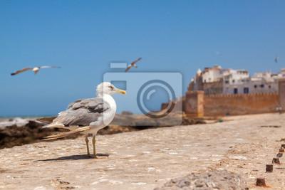 Twierdza i mury Essaouira miasto w atlantyckim wybrzeżu Maroka,