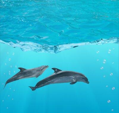 Fototapeta two dolphins under blue water
