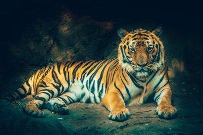 Fototapeta tygrys z kamienia tle górskich w ciemnym ponurym majestatycznym niebezpieczne, przerażające uczucie efektu kolorystycznego.