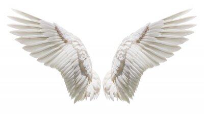 Fototapeta Upierzenie białego skrzydła białego